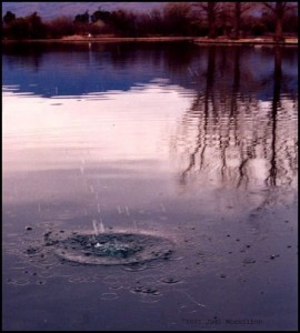 Photograph: Reflection and Ripples in a Pond